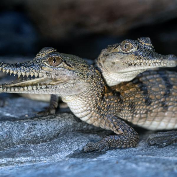 Adventure: Animal-Mania at Armadale Reptile & Wildlife Centre