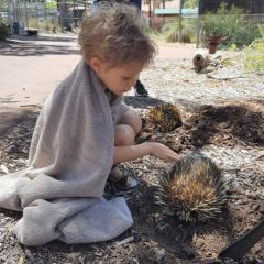 Adventure: Protected Creatures at Kanyana Wildlife