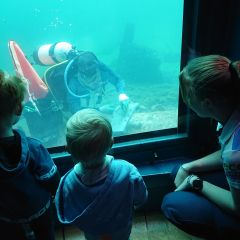 Adventure: Oceanic Explorations at Busselton Jetty & Playground Foreshore