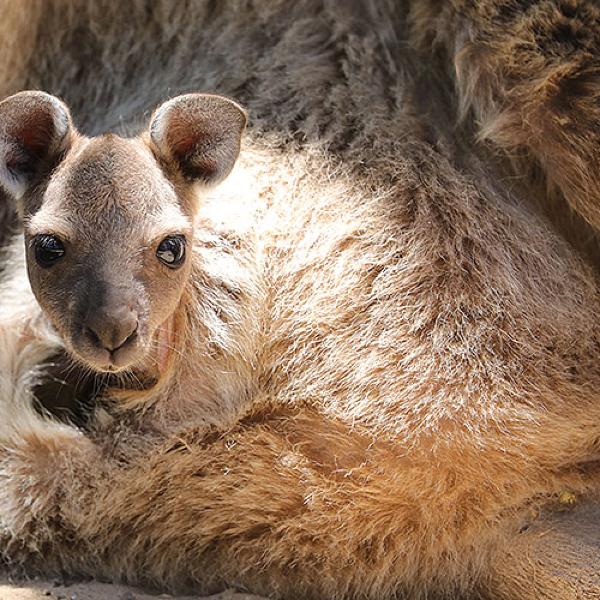 Adventure: Furry Sidekicks at Urimbirra