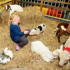 Adventure: Furry Sidekicks at Swan Valley Cuddly Animal Farm