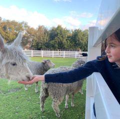 Adventure: Furry Sidekicks at Landsdale Animal Farm