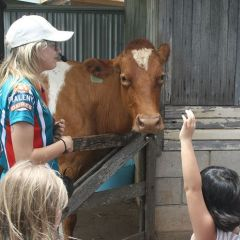 Adventure: Farmtastic Friends at Maleny Dairies