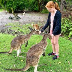 Adventure: Animal-Mania at Caversham Wildlife Park