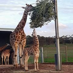 Adventure: Animal-Mania at Monarto Safari Park