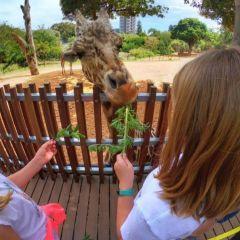 Adventure: Animal-Mania at Perth Zoo